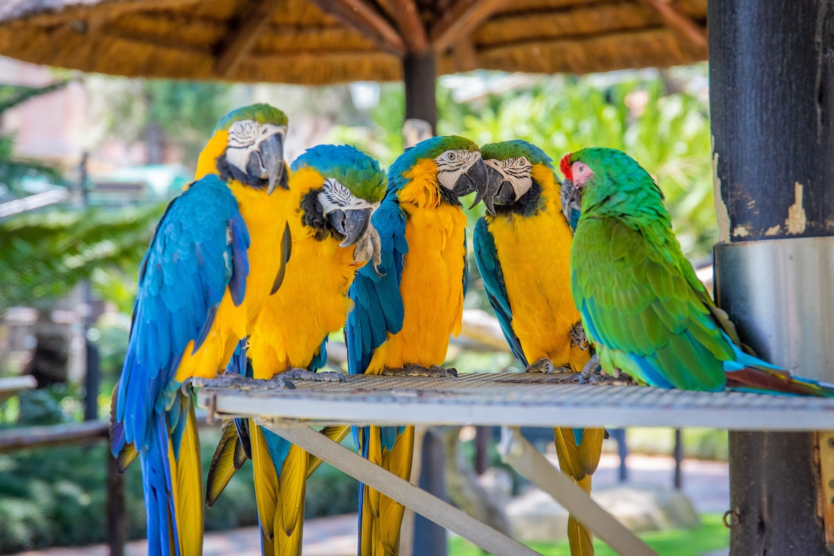 10 Fun Facts about Parrots