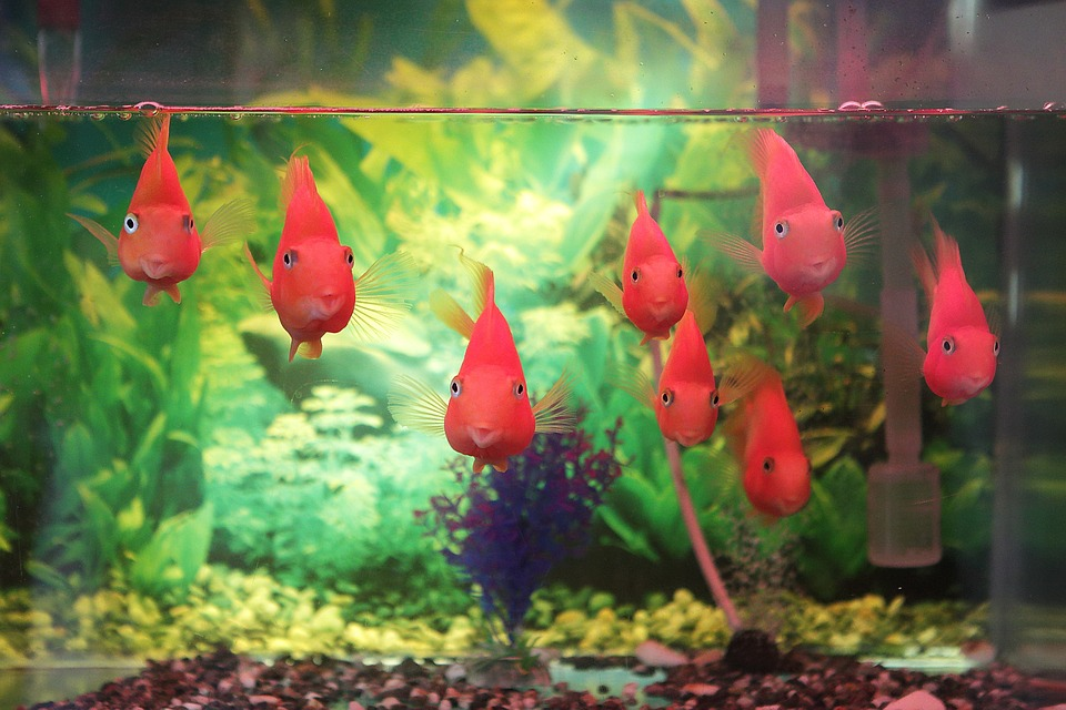 Having aquariums in your home makes the space feel more inviting and natural