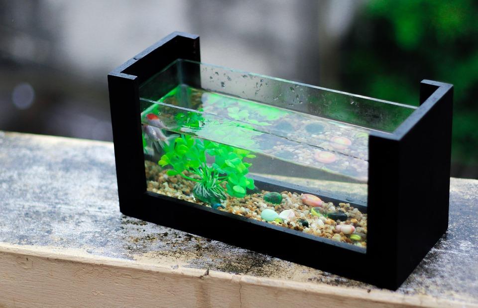 Having aquariums teaches a lot about responsibility