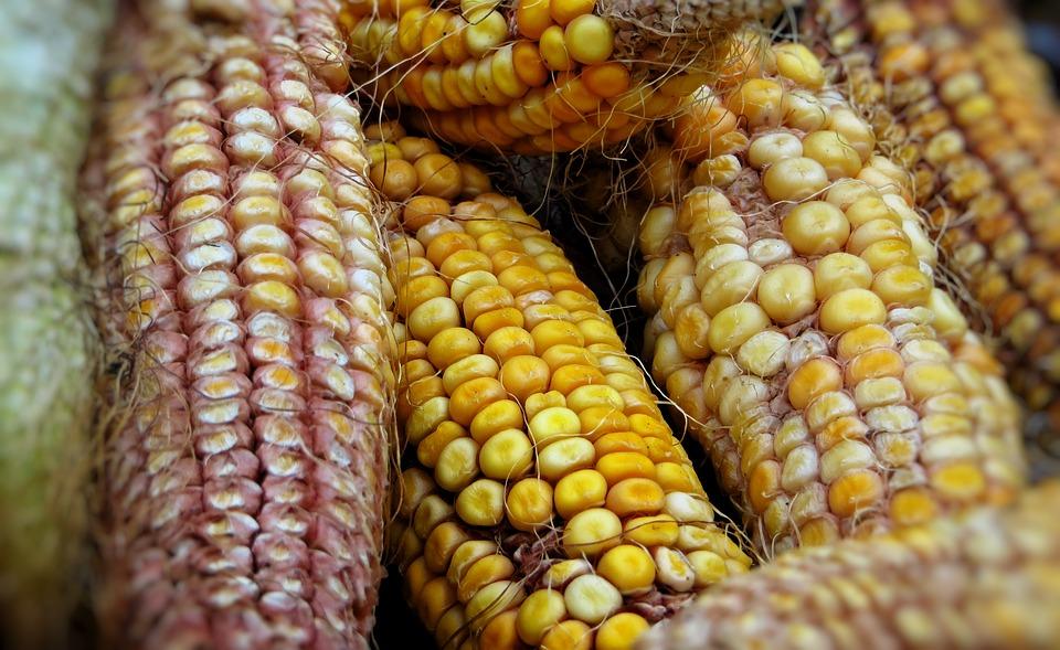 Seven Dried Corn