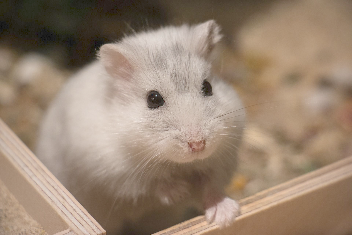 10 Surprising Facts about Hamsters